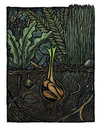 Germination - Artwork by Ricardo Levins Morales Art Studio